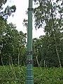 Holme Fen, Cambridgeshire (48092247436).jpg