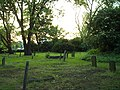 Holy Trinity Parish Burial Ground - geograph.org.uk - 23800.jpg