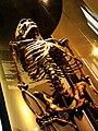 Homo neanderthalensis Skeleton - Natural History Museum Of Vienna.JPG