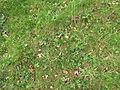 Horní luka, rostliny III.jpg