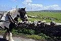 Horse Cart, Inishmore (40325696940).jpg