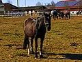 Horses - panoramio (11).jpg