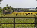 Horses at Burn House Farm - geograph.org.uk - 1339311.jpg