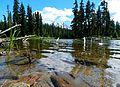 Horseshoe Lake Reflection.JPG