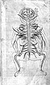 Human figure, venous and nervous system, Persian, 18th C Wellcome L0002720.jpg