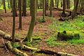 Hyner Run State Park (2).jpg