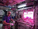 ISS-39 Steve Swanson with Veggie in the Columbus module.jpg