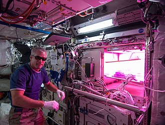 """Astrobotany - """"Outredgeous"""" red lettuce cultivar grown aboard the International Space Station."""
