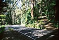 I love photographing Mount Dandenong Tourist Road (25703591288).jpg