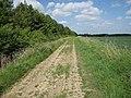 Icknield Way Path - geograph.org.uk - 1321088.jpg