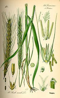 Farina di Segale Biologica (cf. da 5 kg) - GreenEat di Ventricelli ... 115df98df236
