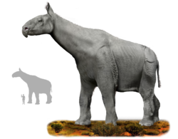 Indricotherium.png