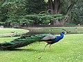 Jardin Massey - panoramio - cazah.jpg