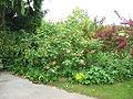 Jardin a la faulx 181.jpg