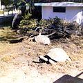 Jardin botanique de Tananarive (3202533443).jpg