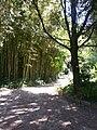 Jardin des plantes de Montpellier 03.jpg