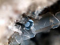 Jeremjevite little blue crystal tubes - Ochtendung, Eifel, Germany.jpg