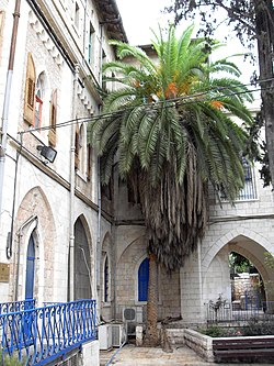 Jerusalem German Hospice (Italian Synagogue) palm tree.jpg
