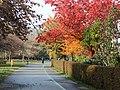 Jeseň na Terase - panoramio.jpg