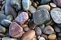 Jewels of the Boar's Head Shoreline, Morayshire - geograph.org.uk - 175836.jpg