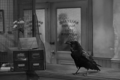 Jimmy the raven in It's a Wonderful Life bw.png