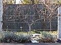 Jonagold apple tree (60392).jpg