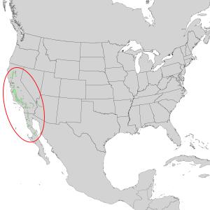 Juniperus californica - Image: Juniperus californica range map 1
