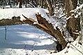 Kaiserwald Wundschuh 06.jpg