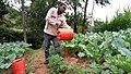 Kale growing.jpg