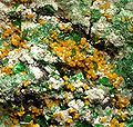 Kasolite-Torbernite-Malachite-165792.jpg