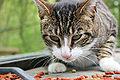 Kat met brokjes.jpg