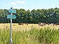 Kindelwald - Wegweisern (Signposts) - geo.hlipp.de - 39566.jpg