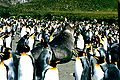 King penguins and elephant seal.jpg