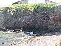 Kittiwake nests, Dunbar - geograph.org.uk - 1276349.jpg