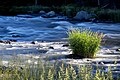 Klamath River (27694195643).jpg