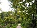 Knipprather Wald.JPG