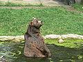 Kodiak bear hamburg.JPG