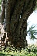 Kruger National Park, South Africa (8342100904).jpg