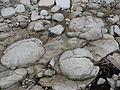 Kybassaare stromatopoorid 29.07.2010.jpg