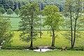 Lügde - 2015-05-24 - LIP-049 Ilsenbach (5).jpg