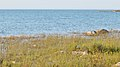 Lake Huron viewed from MacGregor Point Provincial Park 01.jpg