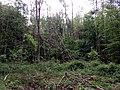 Landschaftsschutzgebiet Strothheide Melle Datei 23.jpg