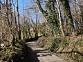 Lane to Lustleigh - geograph.org.uk - 1761673.jpg