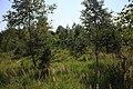 Lasy Łączańskie - panoramio (12).jpg