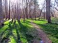 Laurel Bluffs Trail Eno River SP 6187 (7188136926).jpg