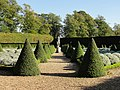 Lavender Garden and Topiary at the Ham House Gardens - Ham, London.jpg