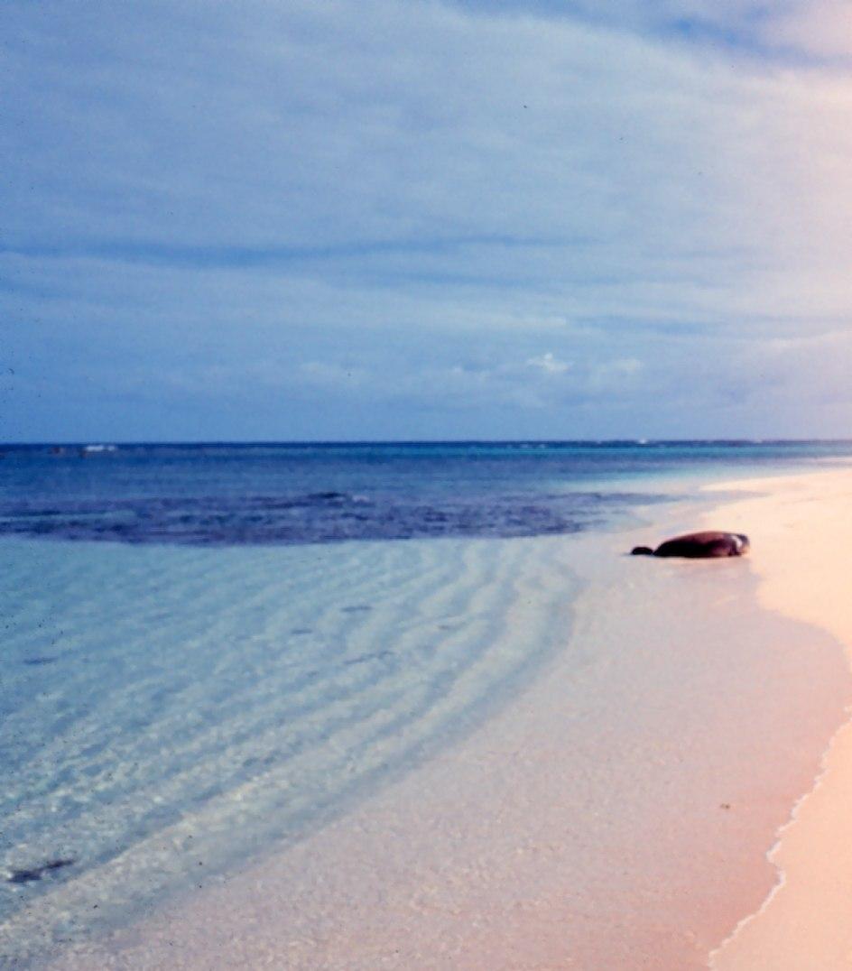 Laysan beach