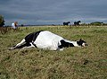 Lazy Bones - geograph.org.uk - 557604.jpg