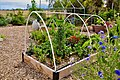 Learning garden - Flickr - Monkeystyle3000.jpg