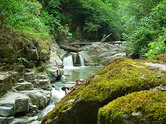 Caspian Hyrcanian mixed forests - Lerik region of Azerbaijan